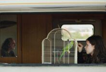 """صورة """"مجرة أندروميدا"""" يفتتح عروض مسابقة أسبوع النقاد بالقاهرة السينمائي"""